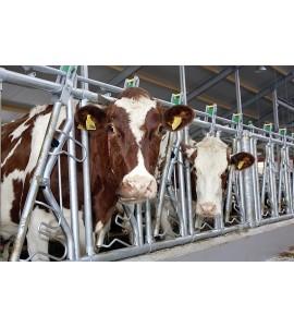 Abtrennung für Tierbehandlung